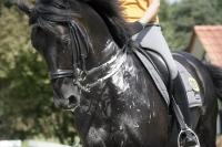 Fokus på saltmangel hos heste.