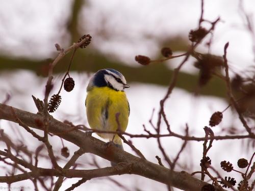 Fodring af havens fugle hele året.