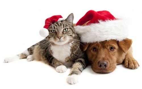 Hjælp dit dyr trygt gennem jul og nytår